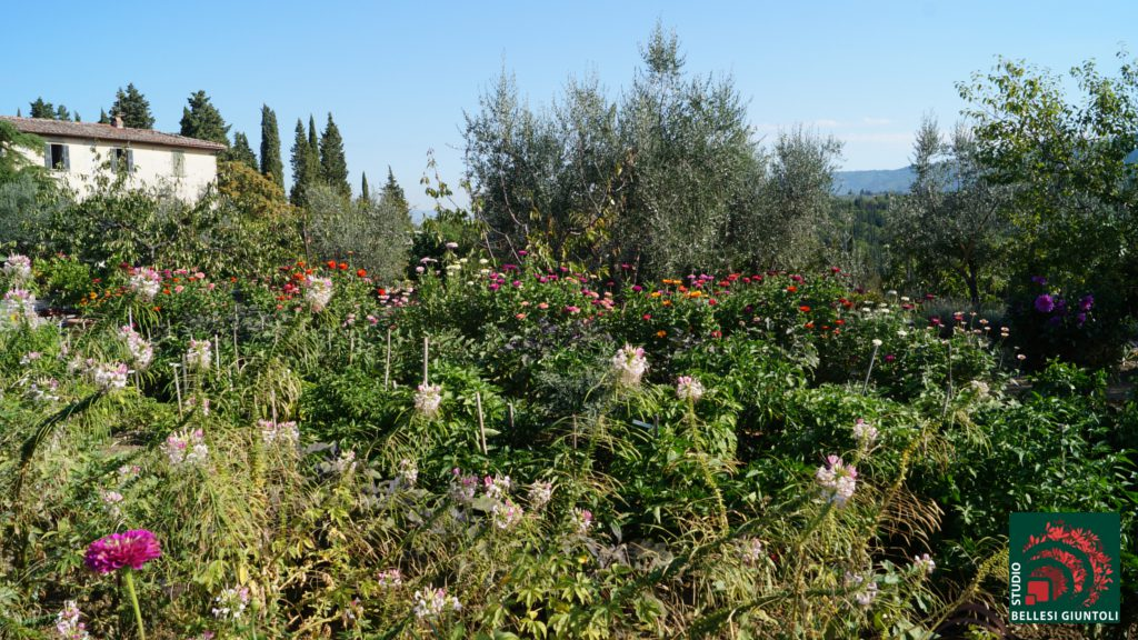 biodiversity castel ruggero vegetables in the garden