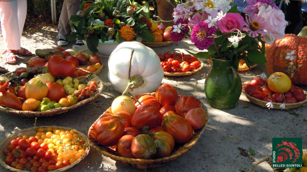 tomatoes varieties castel ruggero vegetables in the garden