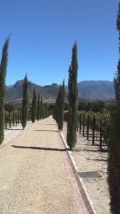 tuscany landscape south africa exotic plants
