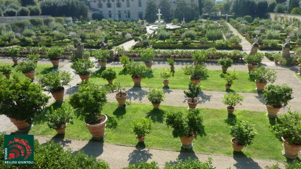 Italian garden today the sources of a style citrus collection castello villa reale florence exotic plants sisterspd